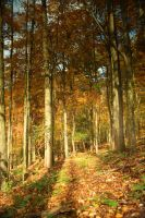 Colorful Forest 8 by bean-stock