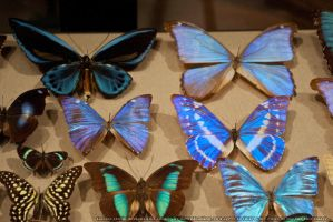 Butterflies : 11 by taeliac-stock