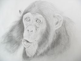 Funny chimpance by TERRIBLEart