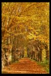 Autumn Alley by pitchblacknight