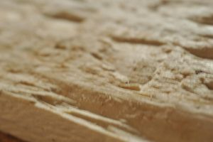 wood plank by Patterns-stock