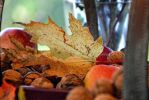 Autumn Leaf by artamusica