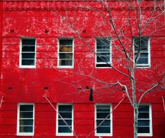 the red house by mollygunn