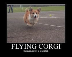 Flying Corgi by iJonesy