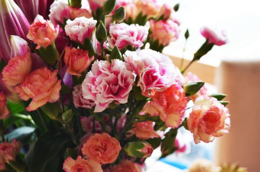 Carnations by cazzle86