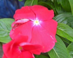 a very bright pink flower by cbarkasi