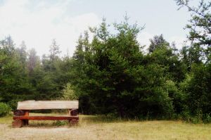 Bench by Nikee97