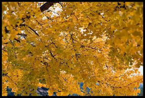 Yellow Leaves by themobius