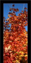 Autumn leaves - 2 by assimilated