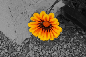Flower Image by Newway12