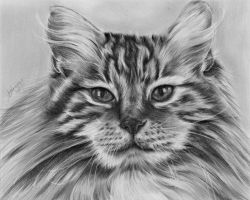 Cat Study by jennieannie