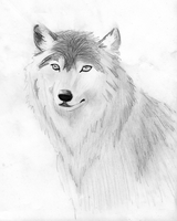 Hope's Wolf by Lapt0pGuy