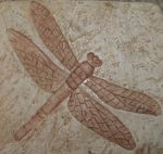 Dragonfly Coaster by Rubyfire14-Stock