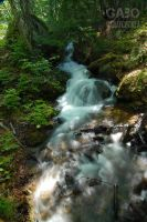 On the Way to Dyea, Alaska 04 by GabOrcinus