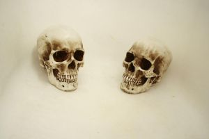 two skulls again by DangerouslyStock