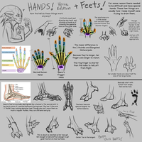 How to Veera Hands and Feets by Riyami