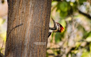 A woodpecker by umerr2000