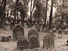 Forest cemetery by PaSt1978