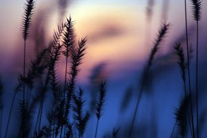 Grasses in a Softer Light 3 by UnderTheWildMoon