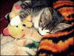 Kitten loves teddy bear by EllaLovesTeddy