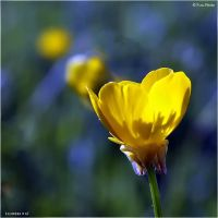 Flowers_67 by Marcello-Paoli