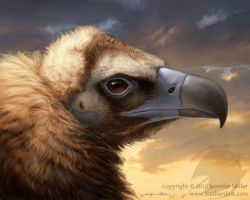 Cinereous Vulture by Nambroth