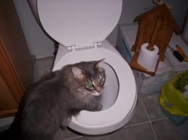 Drinking outta the toilet 1 by nikkihog