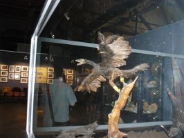 archaeopteryx 3 by omg-stock