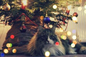 Resting under Christmas Tree by DayanaGerber