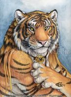 Tiger Portrait by Goldenwolf