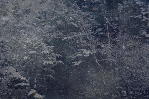 Background snow by 1989juni