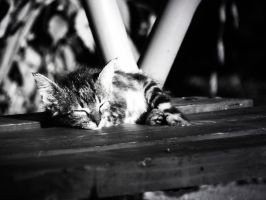Sleepy cat by apopov