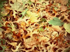 The Fallen Leaves by monkeyluver199