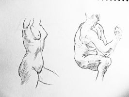 Proportion Muscle Study of Male and Female Bodies by PaulDS89