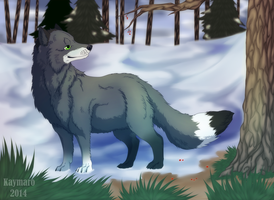 Arctic Fox by Kaymaro