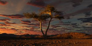 One Tree by SwissAdA