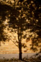 365.052: Shadow Tree by linderel