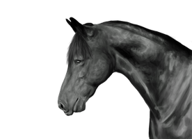 Realistic Horse Grayscale by AmarosoRanch