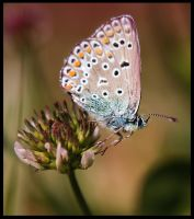 Spring's butterfly by Nataly1st