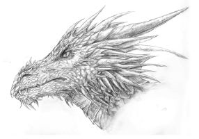 Portrait of a Dragon by Kinsara