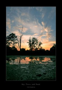 Sky, Trees, and Pond by welder