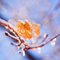 .:Frozen Leaves:. by RHCheng
