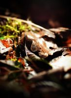 Fallen Leaves by Denitorious