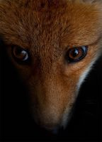Hungry Eyes by Skia