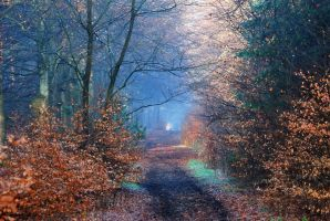 On the enchanted trail by jchanders