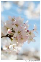 Spring Bouquet on the Branch by butterfly36rs