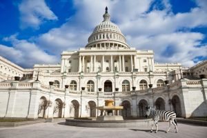 Washington Capitol Zebra - Exclusive Premade Stock by somadjinn