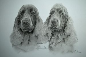 Commission - Cocker Spaniels 'Poppy and Milo' by Captured-In-Pencil