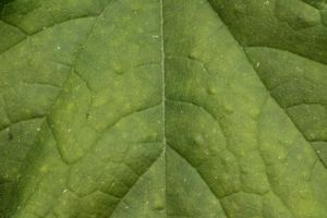 Leaf Texture 2 Stock by wuestenbrand