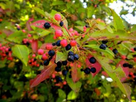 Berries by GeorgieLou